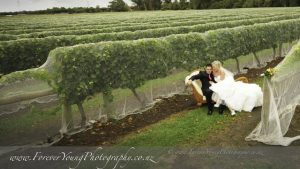 vineyard wedding sitting by the grapes